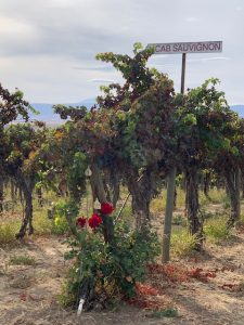The oldest vines at Red Willow Vineyard are Cabernet Sauvignon planted in 1973.