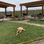 Murphy the winery dog
