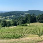 Youngberg Hill Vines