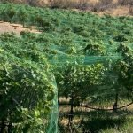 Vines seen at Hard Row to Hoe during unexpected trip