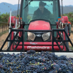 Troon Wines Harvest 2021
